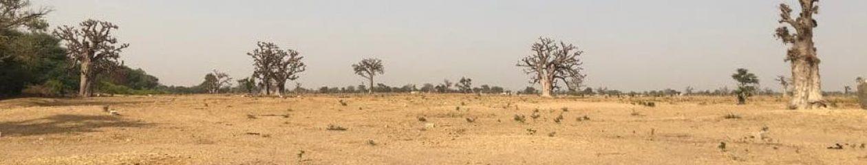 KinkeliBa NIANING Senegal